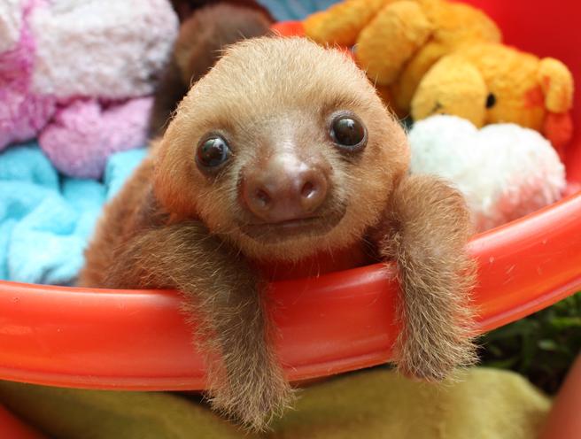 Baby Sloth image on Bournefree Live news website