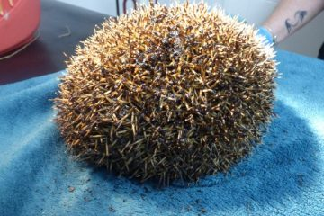 Hedgehog's lucky escape from Bonfire in Pevensey Bay sparks warning on Bournefree website