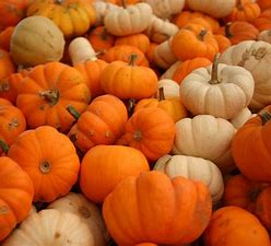 Old Town Pumpkin Trail on Bournefree website