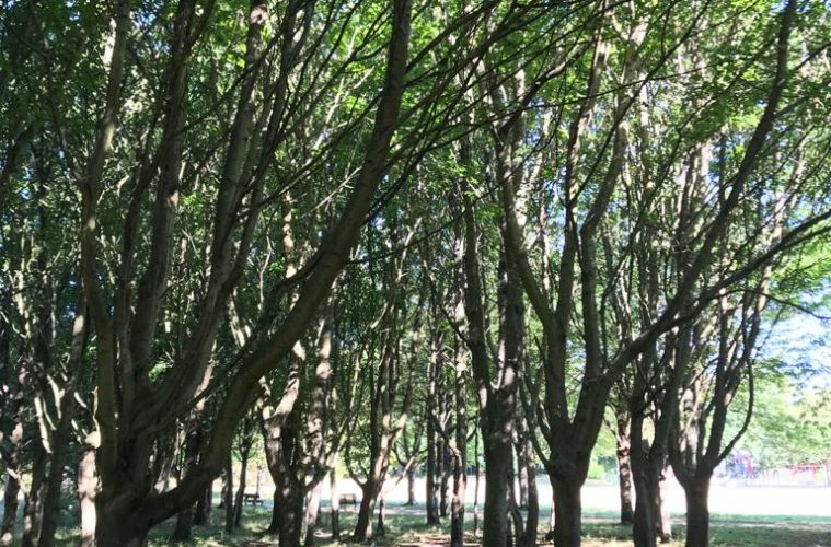 11,000 trees to be planted at Sevenoaks Road Rec in Eastbourne on Bournefree website