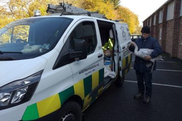Wildlife volunteers rescue 'crash-landing' young swans in Eastbourne on Bournefree website