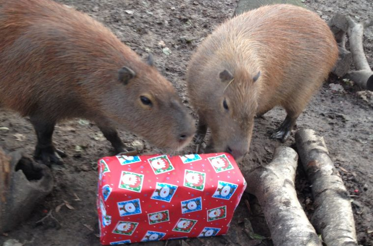 An Eco-Friendly Wrapping Paper Reminder from Zookeepers at Drusillas Park on Eastbourne Bournefree magazine
