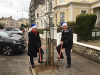 More than a dozen trees have recently been planted across Eastbourne thanks to local councillors. on Bournefree magazine website