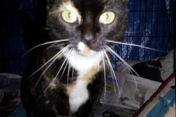 Plea to find owner of cat found in very bad weather near Eastbourne Pier on Eastbourne Bournefree website