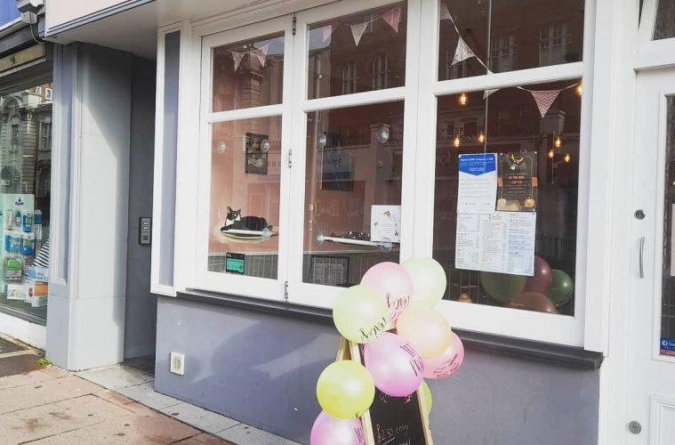 Eastbourne's Cat Cafe fights for survival, The Mad Catter - Vintage Cat Cafe, on Eastbourne Bournefree website