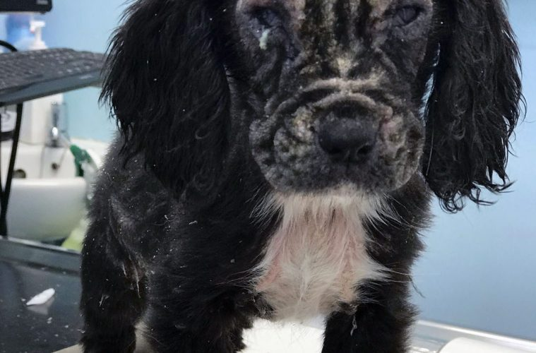 Abandoned puppy rescued by RSPCA now a fighting fit police search dog on Eastbourne Bournefree website