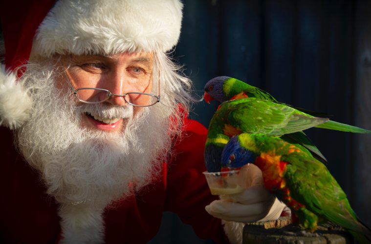 Here Comes Santa Claus! Drusillas' Animals Get an Early Delivery from Father Christmas on Eastbourne Bournefree website
