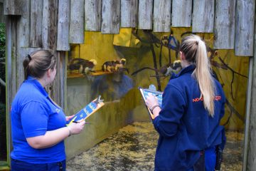 Drusillas Commence Zoo Annual Stock Take on Eastbourne Bournefree website