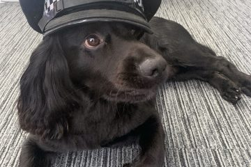 Wellbeing dogs helping police officers and staff open up about mental health