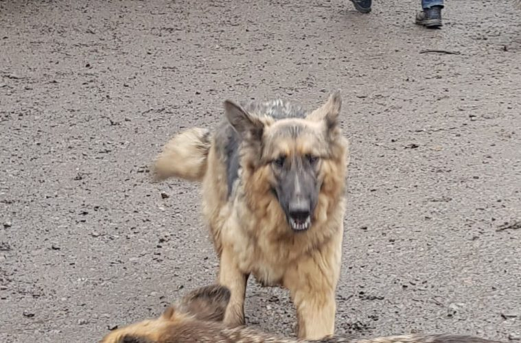 Gun Hill, Chiddingly: Appeal for missing dog on Lost Pets Eastbourne
