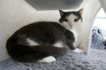 Can you home Squeak for Cats Protection Eastbourne Adoption Centre? on eastbourne Bournefree website
