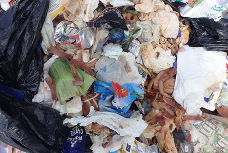 Increase in the levels of food waste contamination in our recycling bins on Eastbourne Bournefree website