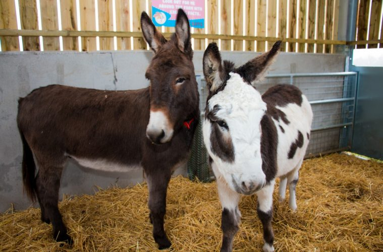 Sponsor one of the animals on the farm helping young people with complex disabilities, Chailey Heritage Foundation, on Eastbourne Bourmefree website