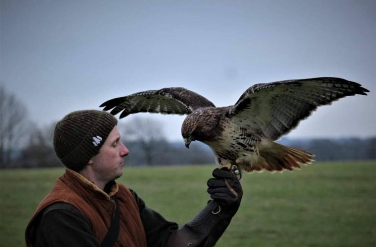 Sussex Falconry is raising £10,000 to find a new home on Eastbourne Bournefree website