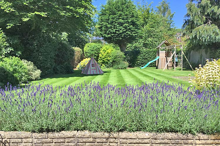 Give your lawn some loving with GreenThumb Lawn Treatment Service on Eastbourne Bournefree website