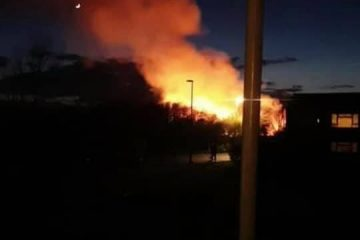 Shinewater Park arson: 'Wild creatures have lost their lives' on Eastbourne Bournefree website