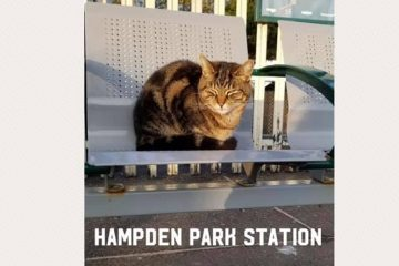 'Risk being charged with kidnap' if you take Daisy the Hampden Park station cat to the vets! on Eastbourne Bournefree website