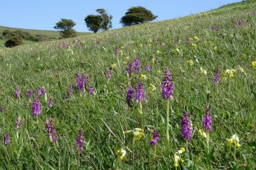 'Lovely to have long grass for the wildlife,' says Eastbourne Borough Council on Eastbourne Bournefree website