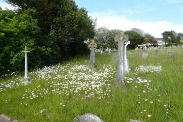 Mowing to be reduced in Eastbourne cemeteries, parks and other open spaces on Eastbourne Bournefree website