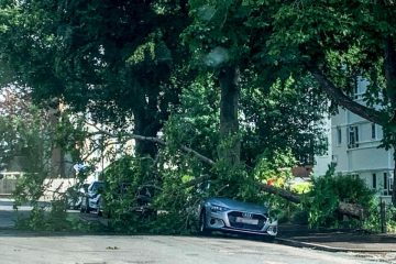 Audi flattened by tree uprooted in Eastbourne on Eastbourne Bournefree website