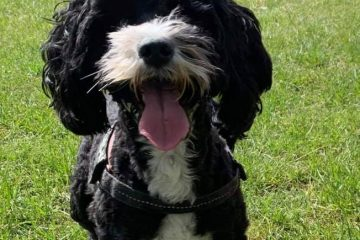 Betty the missing Eastbourne dog has been found on Eastbourne Bournefree website