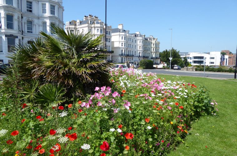 'Great to see so many people enjoying the the new wildflower displays, says Eastbourne Borough Council' on Eastbourne Bournefree website
