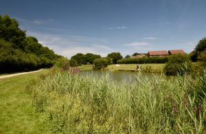 Residents Invited to Enjoy Country Park on Eastbourne Bournefree website
