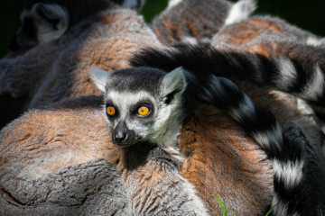 Drusillas' Hunt for local Animal Photographer of the Year on Eastbourne Bournefree website