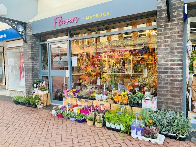 FREE FLOWERS FOR A WHOLE STREET THIS MORNING... THANKS TO MAYBUGS on Eastbourne Bournefree website