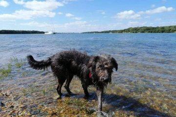Missing dog in East Dean sadly found dead on Eastbourne Bournefree website