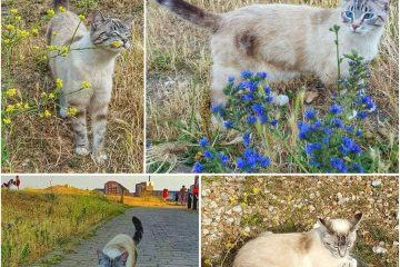 Man and woman tried to steal cat from garden in Sovereign Harbour on Eastbourne Bournefree website