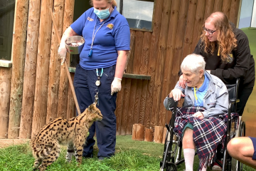 Emotional Moment 100-year-old Betty fulfils lifelong dream to meet serval cat at Drusillas on Eastbourne Bournefree website